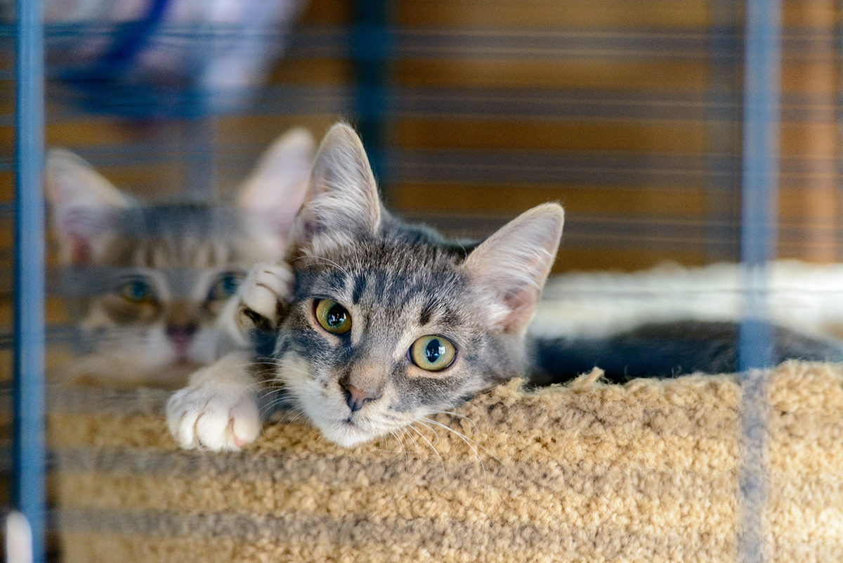 Two cats in a cage